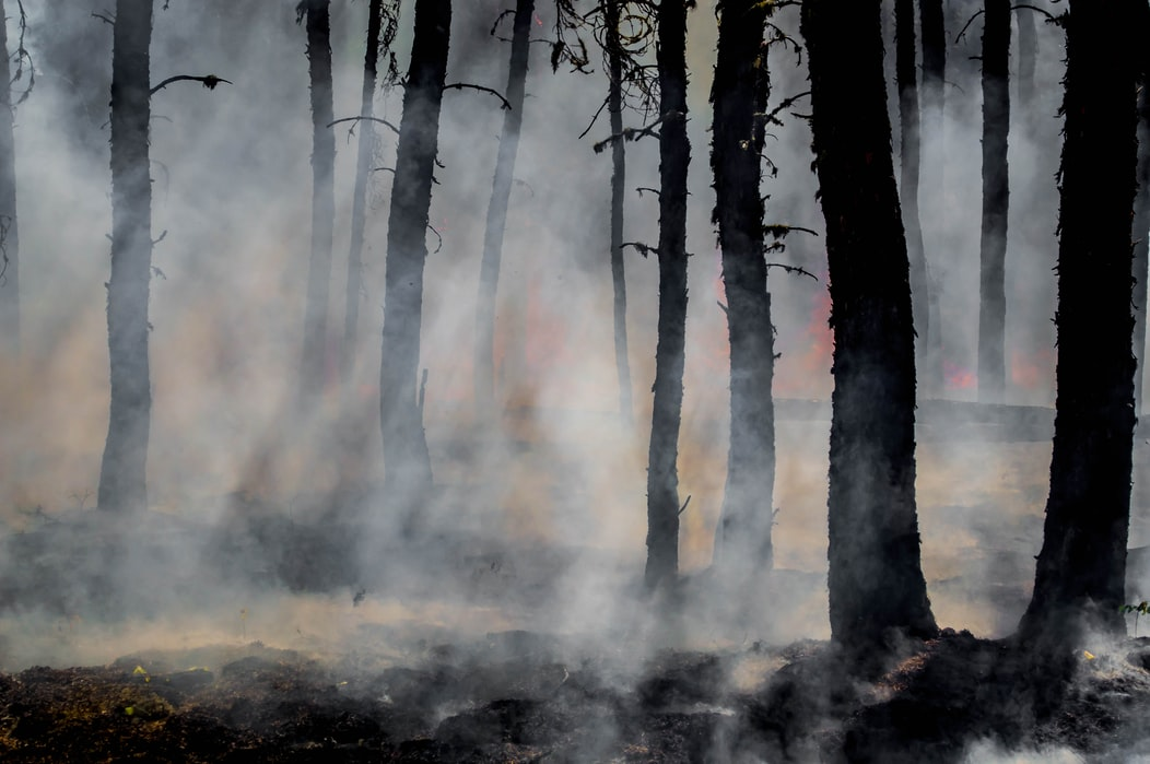 Solving the Wildfire Smoke Problem